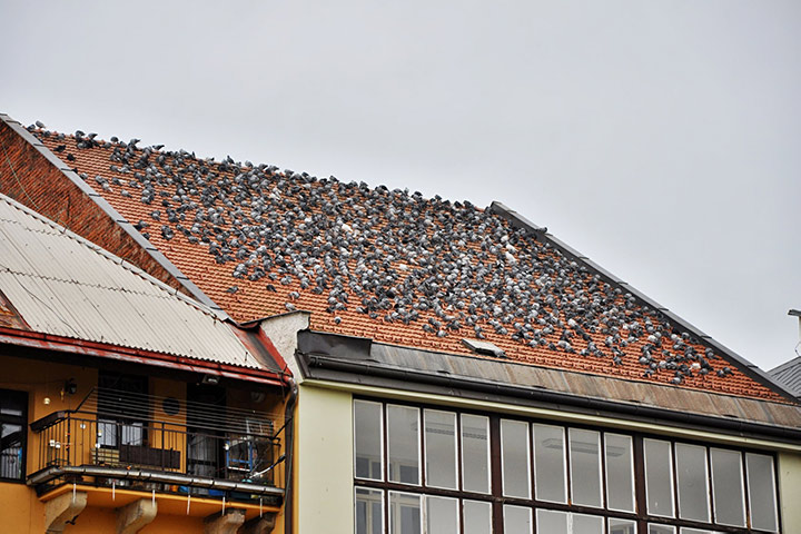 A2B Pest Control are able to install spikes to deter birds from roofs in Amersham.